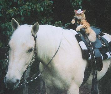 Cat-Riding-a-Horse